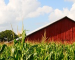 Barn Lawrence County by Dena Wise