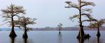 Lake Mattamuskeet by Graham Hickling