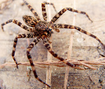 Spider by Graham Hickling