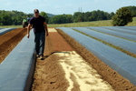 Dr. David Butleron Test: Strawberry Farm by John Cummins