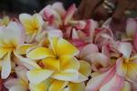 Hawaiian Orchid Lei