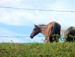 Horses by JerRick Corder