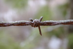Ice on Barbed Wire by Blake Brown
