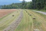 Orchardgrass Hay