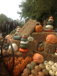 Pumpkin Display at UT West Tennessee Ag Research and Education Center