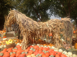 Pumpkin Display with Horse