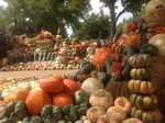 Pumpkin and Gourds at the West Tennessee AgResearch and Education Center