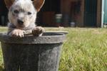 Puppy by Jamie Elaine Allison