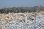 Snow on Switchgrass by Blake Brown
