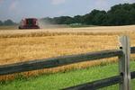 Wheat Harvest by Blake Brown