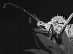 Wheel Bug in the Great Smoky Mountains National Park by Renee Follum