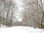 Stopping in the Woods on a Snowy Day