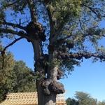 Crepy Tree 2