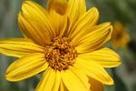 Colrado Wildflowers