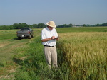 Dr. West Takes Note of his Breeding Lines of Wheat