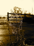 Dew-covered Web