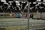 Carl Sams' Greenhouse Class visits Pope's Nursery
