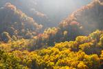 Fall Colors in TN