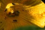 Inside a Pumpkin Flower