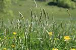 Pasture of Heaven