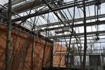 Winter Scene Inside Greenhouse