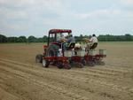 Planting Variety Trials