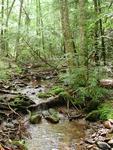 Serene Hemlock and Stream