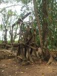 Retired Sugarmill