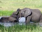 Elephant Kisses