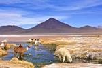 Laguna Los Colorados, Bolivia